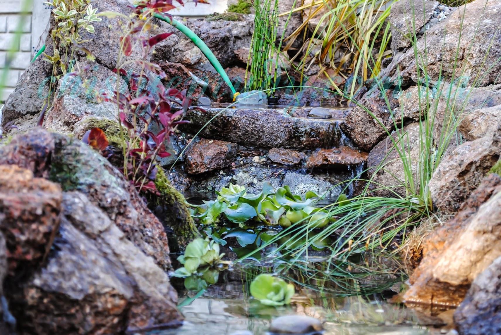 Водопад. Чистые пруды