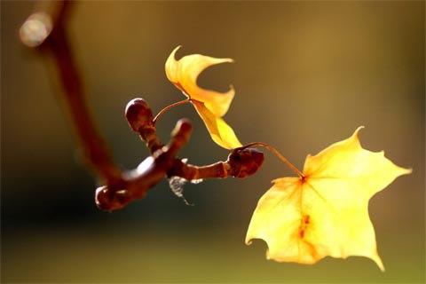 Những bài thơ mùa Thu rụng lá, chiếc lá thu rơi