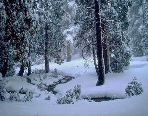 Blue Wooded Sanctuary