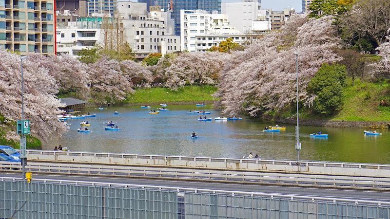 千鳥ヶ淵 桜 写真22