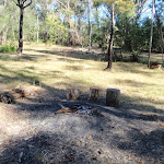 Ten Mile Hollow Campsite (top of Simpson Track) (169760)