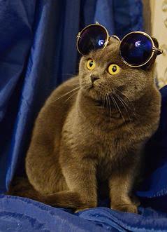 Фильм а с кот ученый