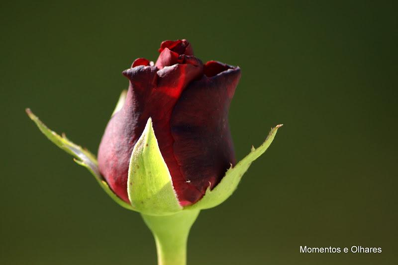 Pelos quintais da minha cidade.. uma rosa