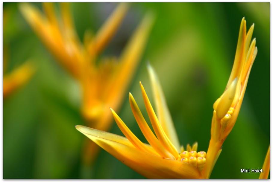 熱帶植物園(圖7枚)