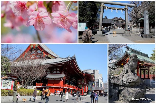 日本.東京.淺草寺.櫻花