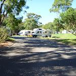 Walking through the Lane Cove River tourist park (384926)
