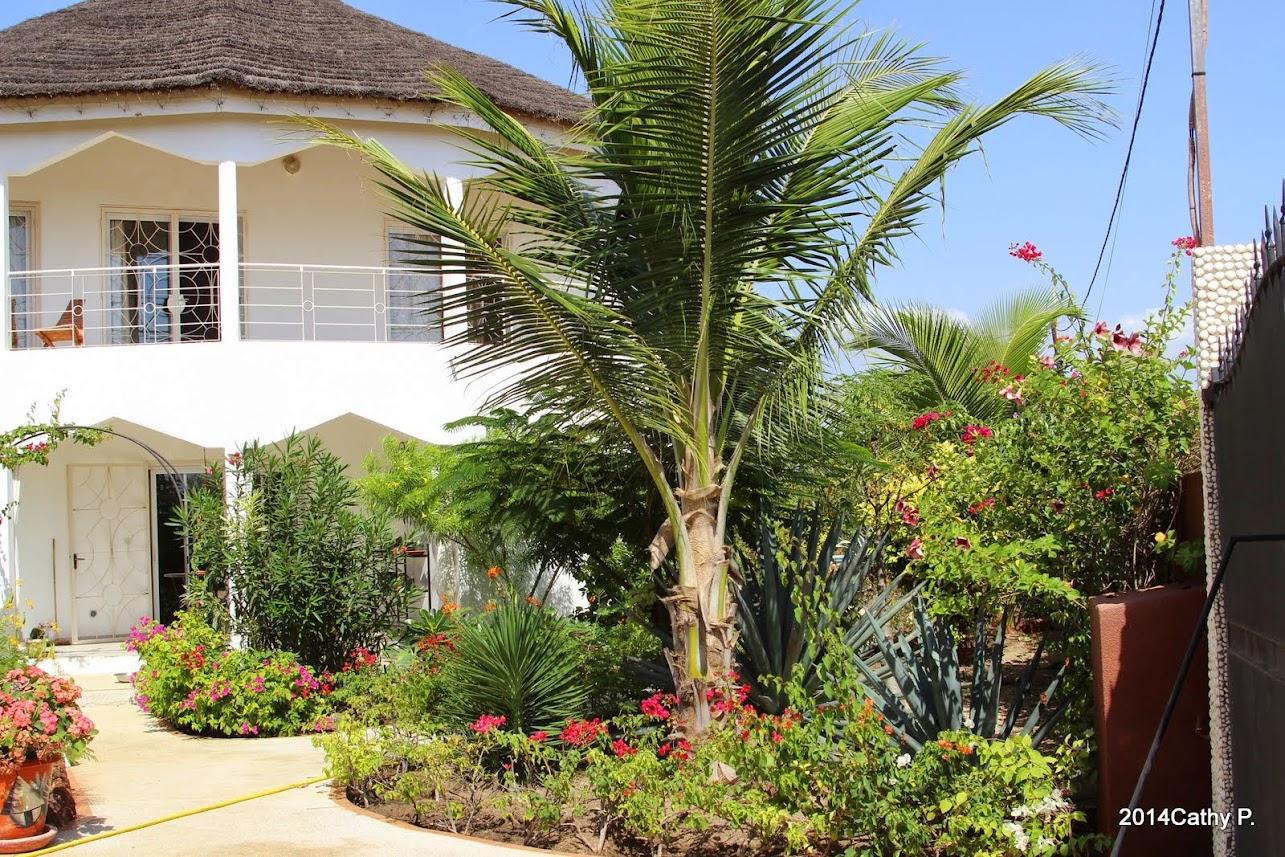 Mon jardin senegalais IMG_1667