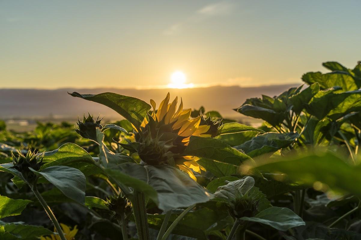 巨大なエネルギーを放つ朝陽。。。