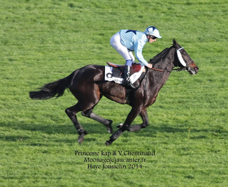 Photos Auteuil 2-11-2014 (48h de l'obstacle) IMG_5620