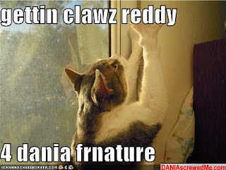 dania furniture lolcat