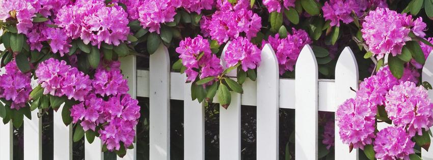 Ảnh bìa hoa đẹp trên bờ rào