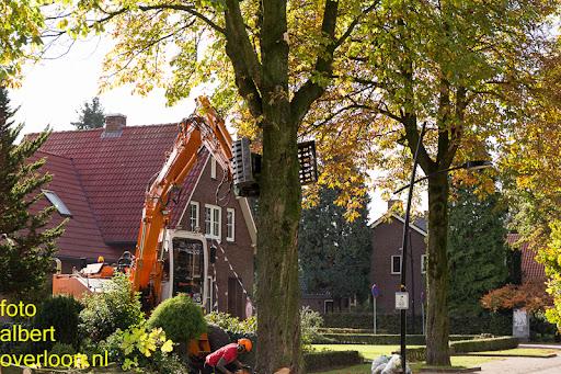 Bomen gekapt Museumlaan in overloon 20-10-2014 (28).jpg