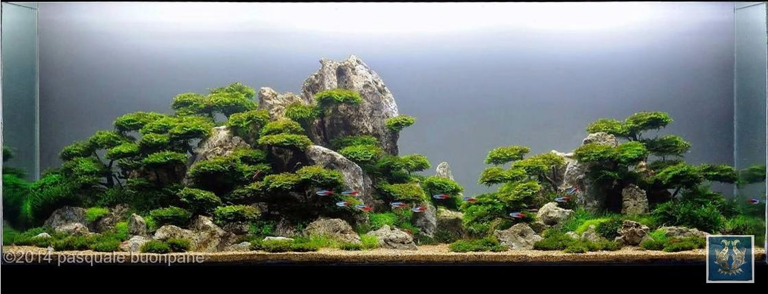 Bộ sưu tập hồ thủy sinh bố cục rừng (Phần 1)