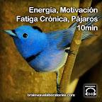 Energía, Motivación, Fatiga Crónica con Pájaros de Fondo - 10min