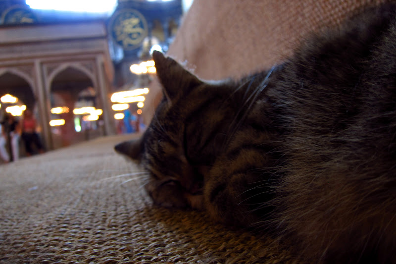 Aya Sofia nap kitty