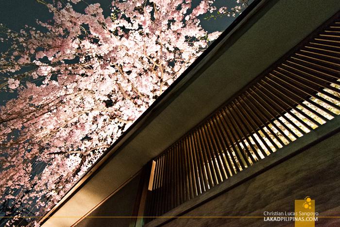 At Sakura Jaya in Tokyo