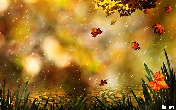 ảnh mưa mùa thu với những chiếc lá phong rơi rụng