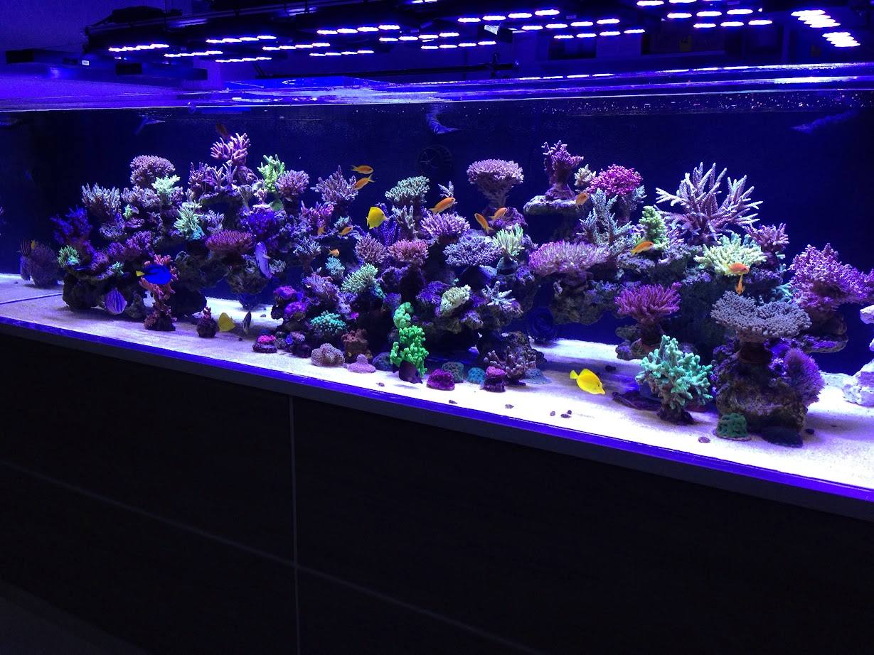 180 gallon reef tank with hydra 52s