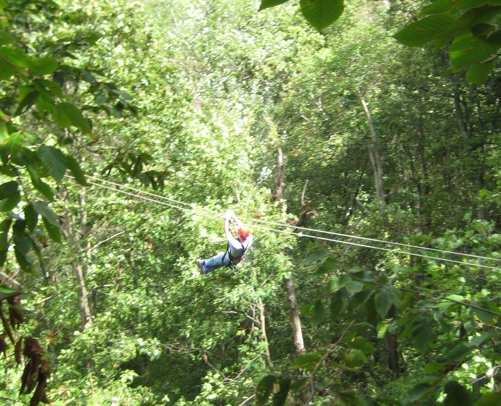 Located only 20 miles west of the Millersburg Ohio Barn Inn Bed and Breakfast is the newest adventure attraction in the Mohican area Tree Frog Canopy ... & The Barn Inn Bed and Breakfast: Zip Line in Ohio Family Fun in ...