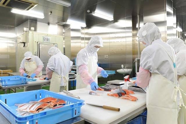 Đơn hàng chế biến thực phẩm thủy sản gia nhiệt cần 6 nam và 3 nữ làm việc tại Hokkaido Nhật Bản tháng 07/2017