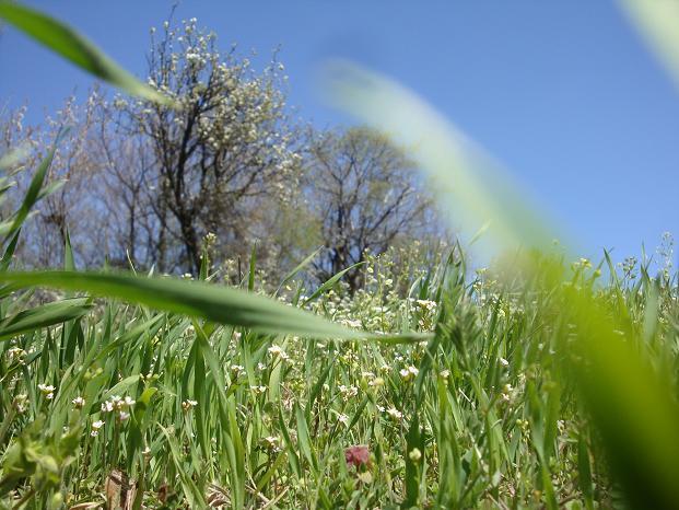 трава на лугу