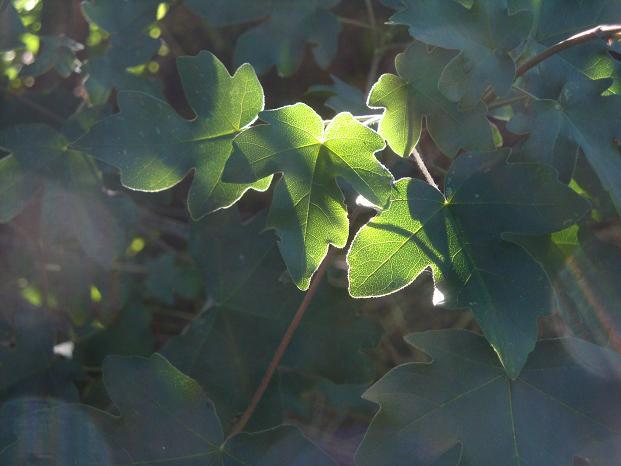 световая кисть в природе