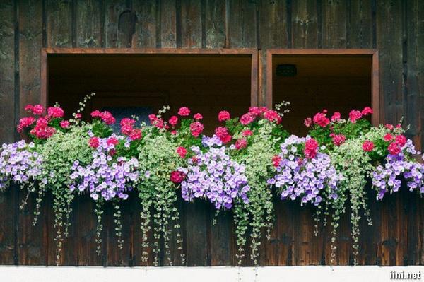 ngôi nhà đẹp với sắc hoa trong nắng hè