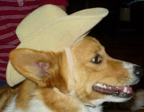 Fun Hat Friday