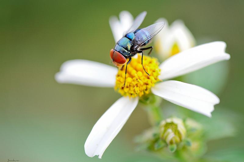 Ảnh hoa xuyến chi và côn trùng