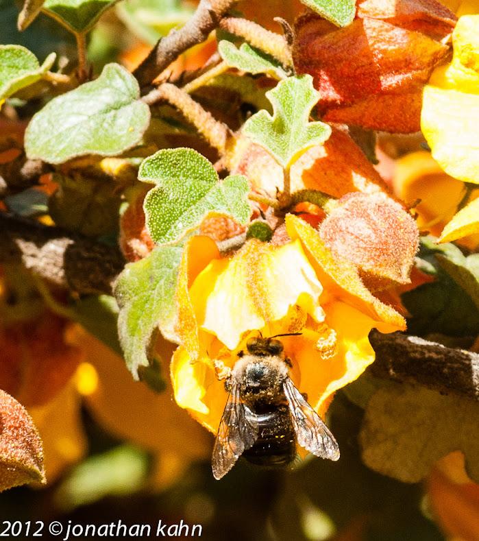 Fall Bee from Jonathan Kahn