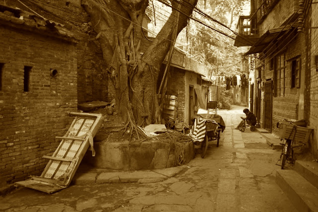 alley in Guangzhou, China, with a large tree and several bikes