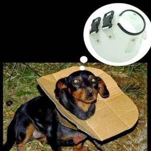 Cachorro pobre