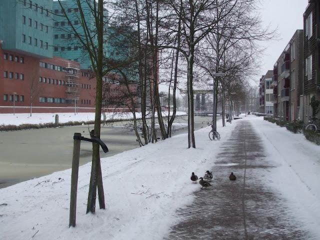marwixkade in de winter