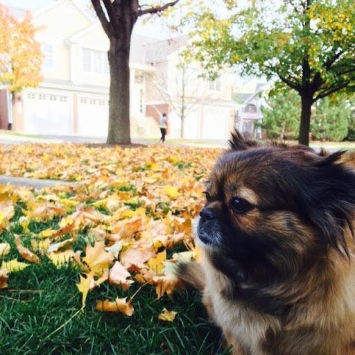 Sun Yim Photo 12