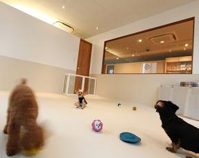 ドッグスタジオ ラブワン品川芝浦のイメージ写真