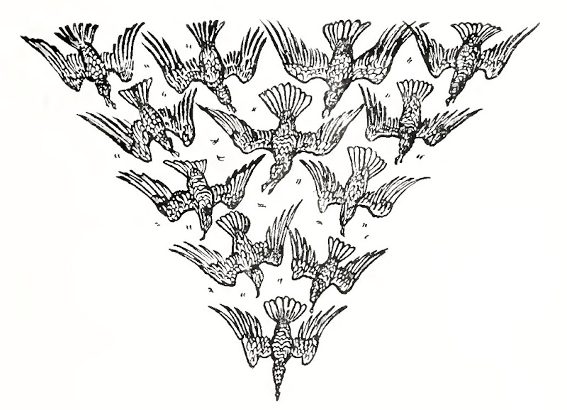 Walter crane сказки братьев гримм