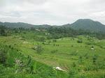 Padangbai: rizières de Sidemen