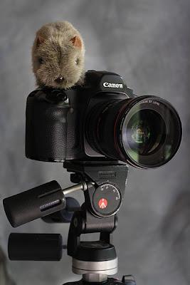 shane, camera