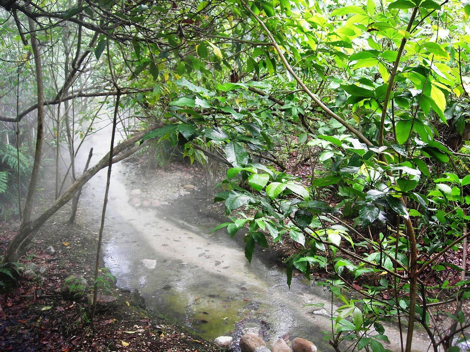 Sungai klah hot springs - The Steamy Stream