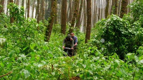 Syukurlah hutan ini masih lebat. Semoga tidak ada tangan perusak yang menghilangkan 'surga' kami ini.
