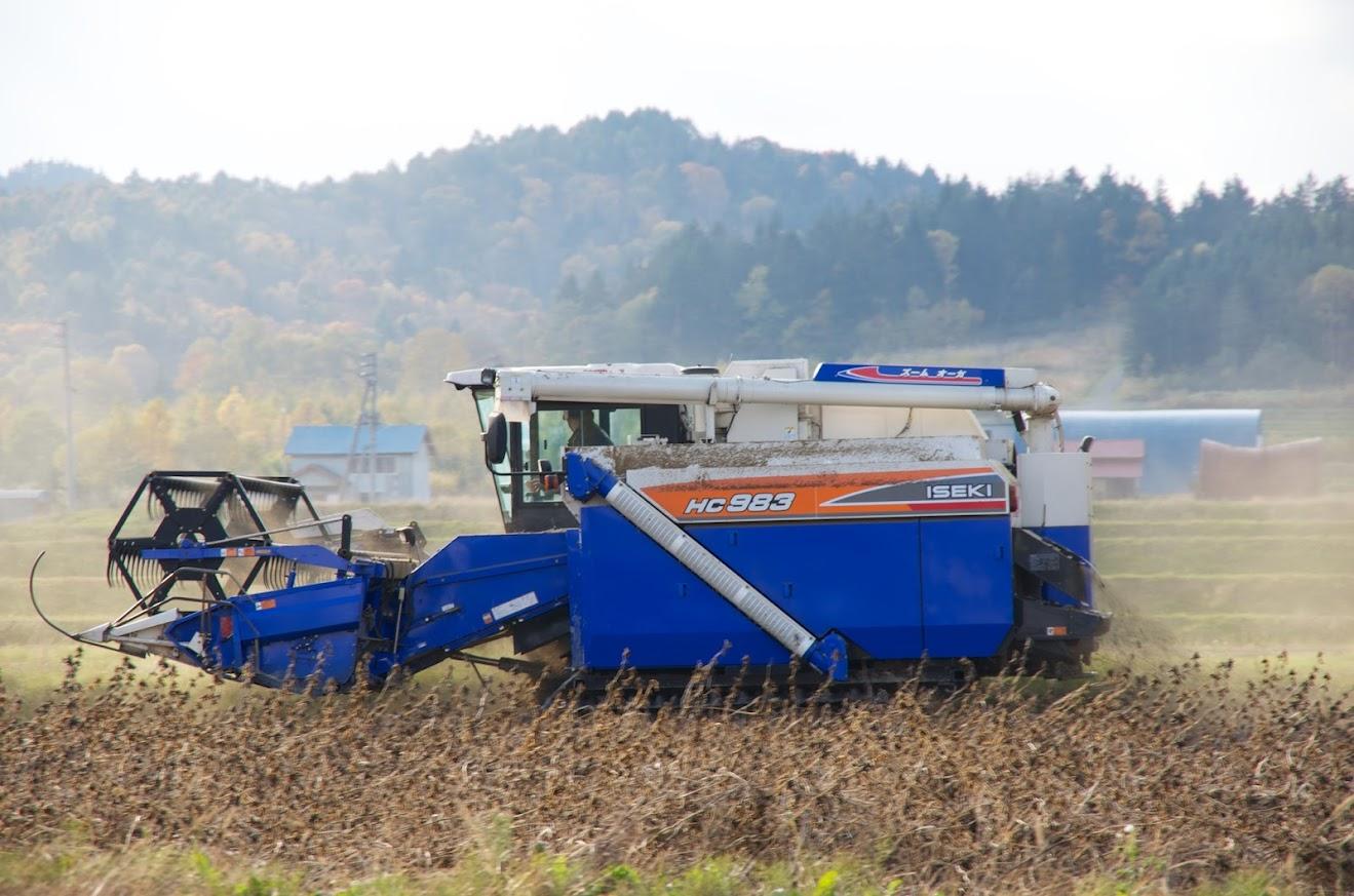 黒千石大豆の収穫