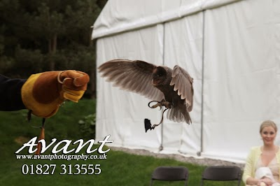 Falconry Experiences