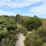Track through the heath north of Garie Beach (99824)