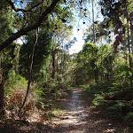 Along the Kanning Walk (233319)