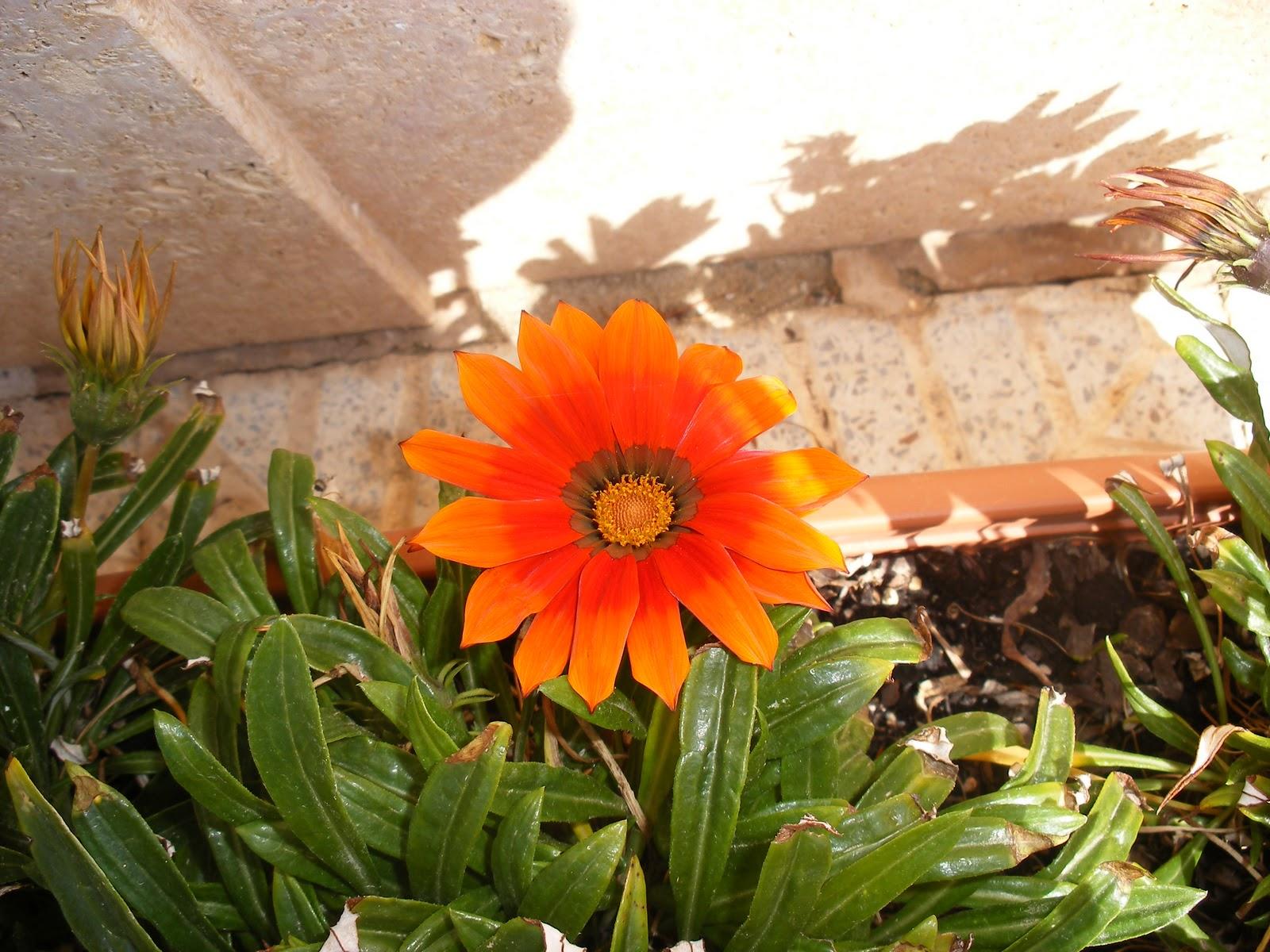 El huerto de ram n flores de plantas ornamentales for 10 plantas ornamentales