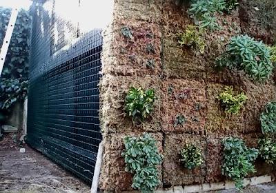 Jardín vertical de Sphagnum