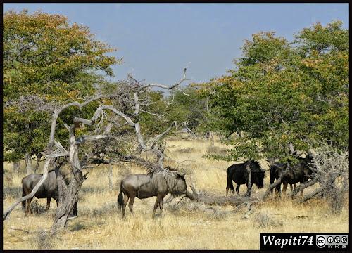 Balade australe... 11 jours en Namibie IMG_0409