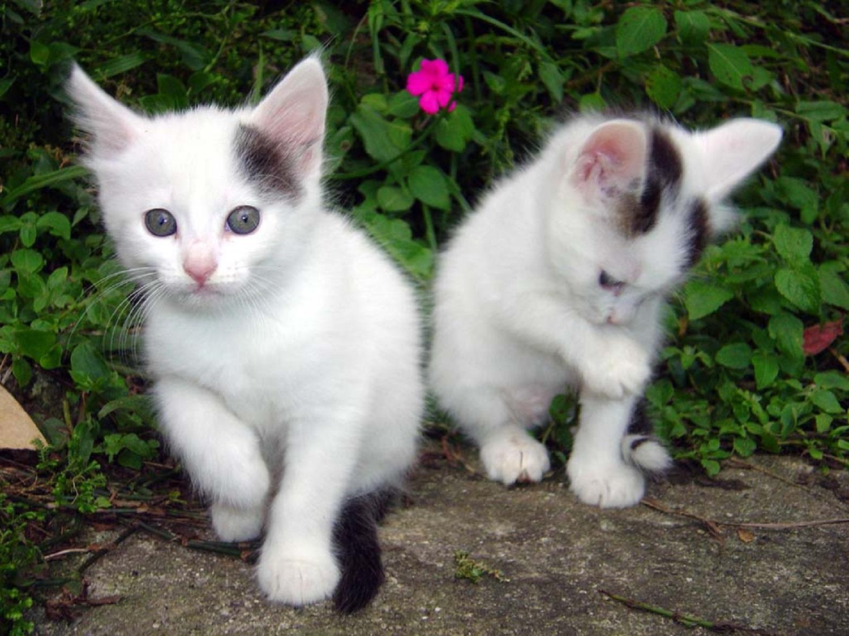 fotos de gatos grises