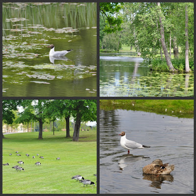 collage of bird images and a pond as described