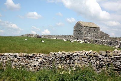 Stone barn and sheep on a walk in the Eden Valley in Cumbria England